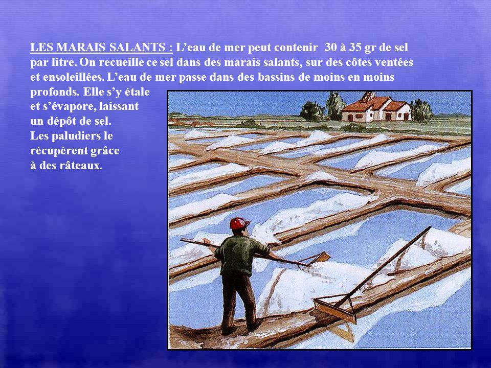 LES MARAIS SALANTS : L'eau de mer peut contenir 30 à 35 gr de sel