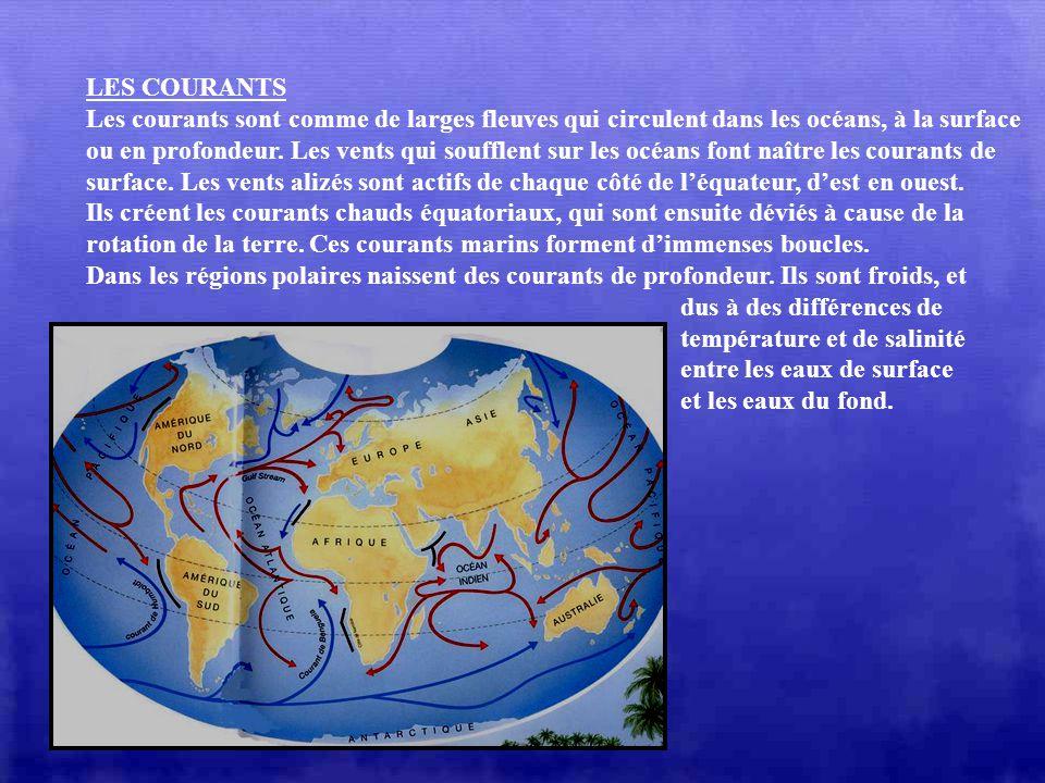 LES COURANTS Les courants sont comme de larges fleuves qui circulent dans les océans, à la surface.