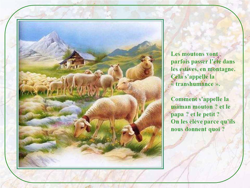 Les moutons vont parfois passer l'été dans. les estives, en montagne. Cela s'appelle la. « transhumance ».