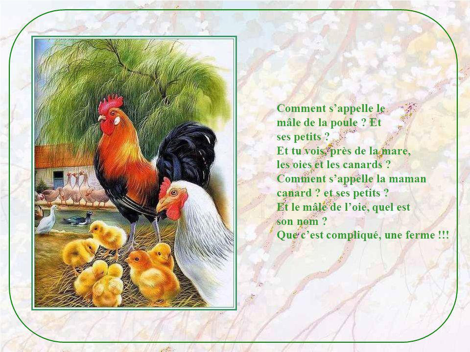 Comment s'appelle le mâle de la poule Et. ses petits Et tu vois, près de la mare, les oies et les canards
