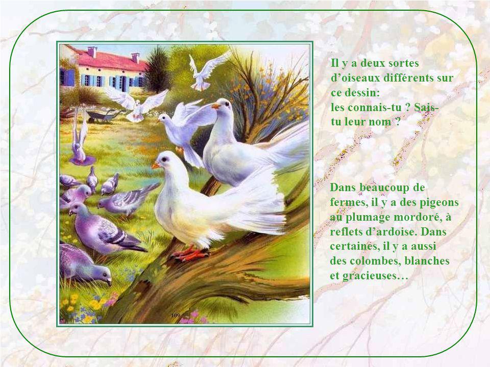 Il y a deux sortes d'oiseaux différents sur. ce dessin: les connais-tu Sais- tu leur nom Dans beaucoup de.