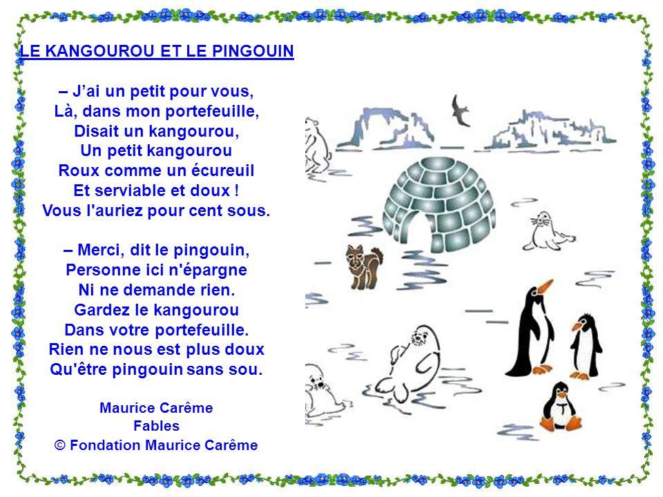 LE KANGOUROU ET LE PINGOUIN – J'ai un petit pour vous,