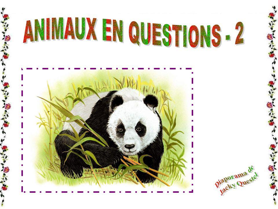 ANIMAUX EN QUESTIONS - 2 Diaporama de Jacky Questel
