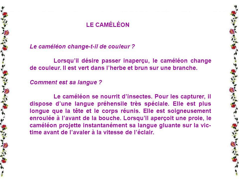 LE CAMÉLÉON Le caméléon change-t-il de couleur