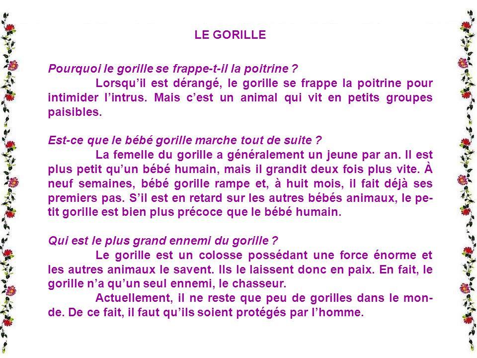 LE GORILLE Pourquoi le gorille se frappe-t-il la poitrine