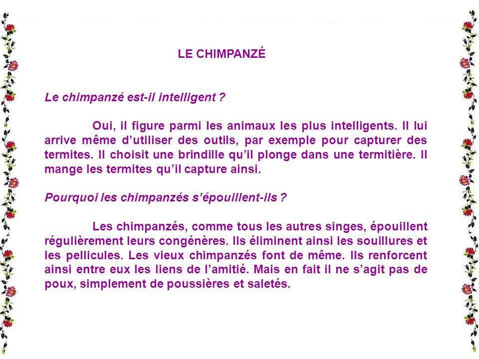 LE CHIMPANZÉ Le chimpanzé est-il intelligent