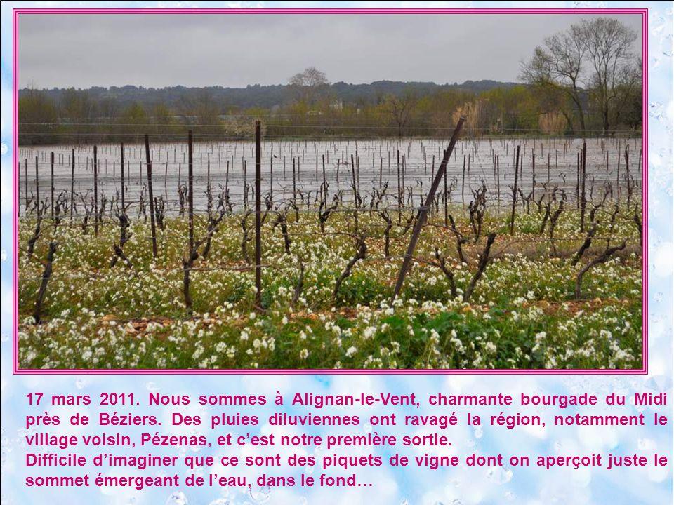 17 mars 2011. Nous sommes à Alignan-le-Vent, charmante bourgade du Midi près de Béziers. Des pluies diluviennes ont ravagé la région, notamment le village voisin, Pézenas, et c'est notre première sortie.