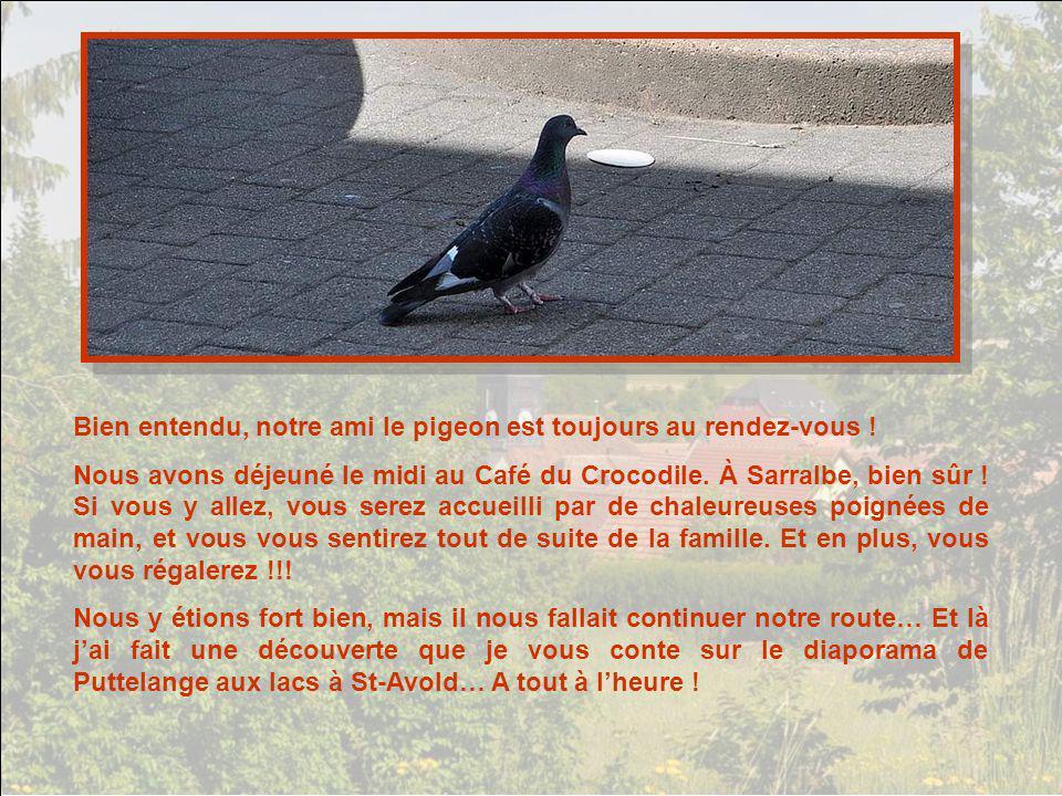 Bien entendu, notre ami le pigeon est toujours au rendez-vous !