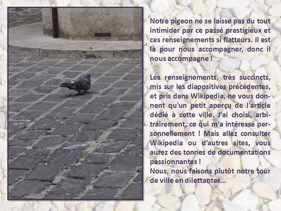 Notre pigeon ne se laisse pas du tout intimider par ce passé prestigieux et ces renseignements si flatteurs. Il est là pour nous accompagner, donc il nous accompagne !