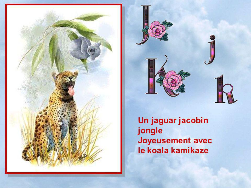 Un jaguar jacobin jongle
