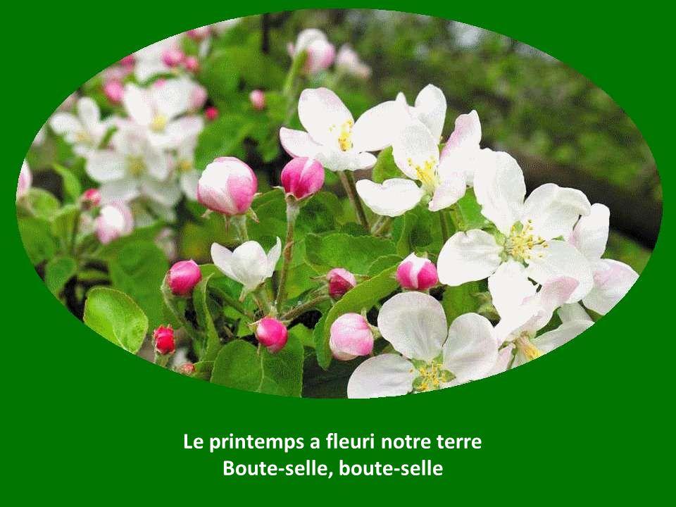 Le printemps a fleuri notre terre Boute-selle, boute-selle