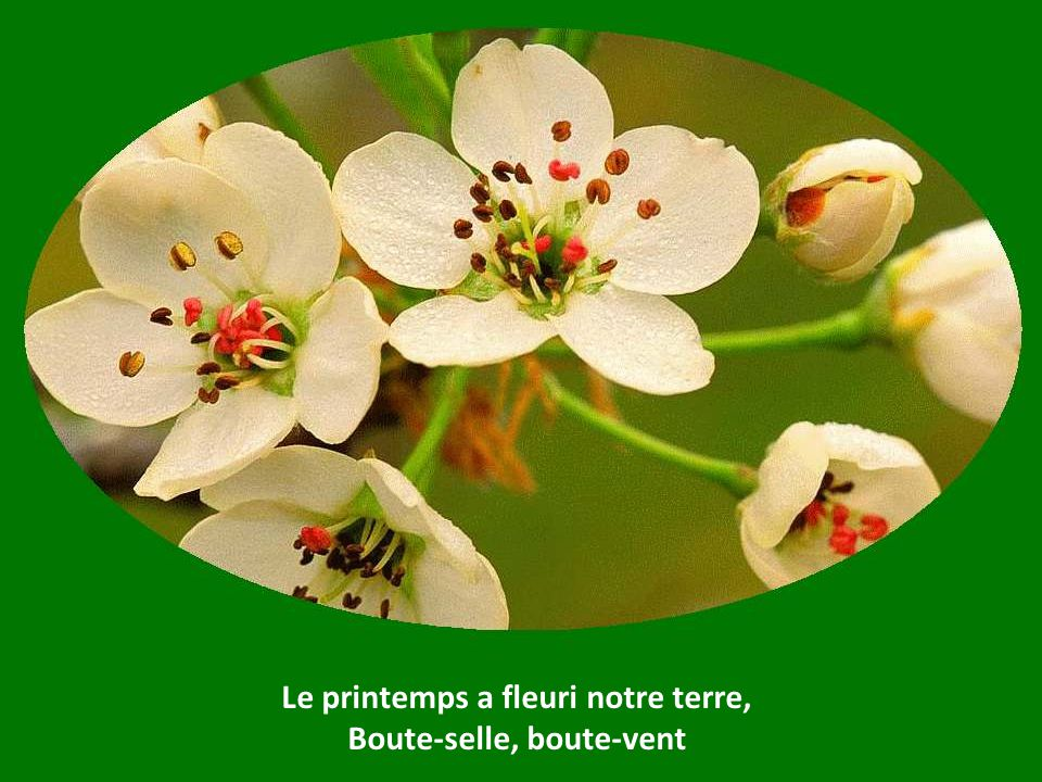Le printemps a fleuri notre terre, Boute-selle, boute-vent