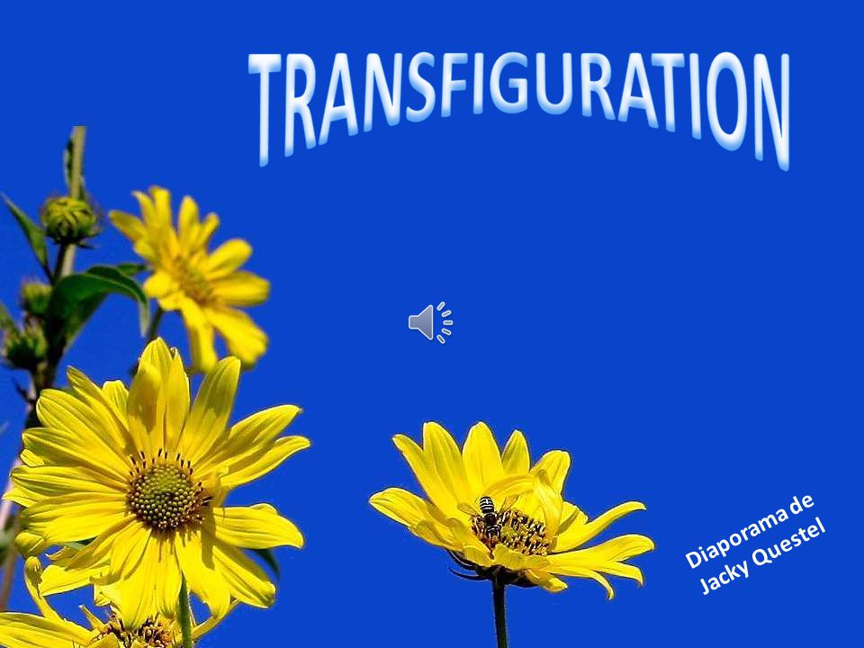 TRANSFIGURATION Diaporama de Jacky Questel