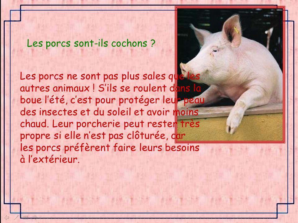 Les porcs sont-ils cochons