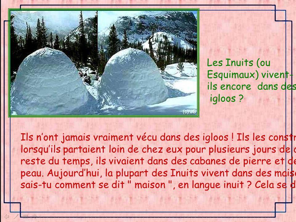 Les Inuits (ou Esquimaux) vivent- ils encore dans des. igloos Ils n'ont jamais vraiment vécu dans des igloos ! Ils les construisaient.