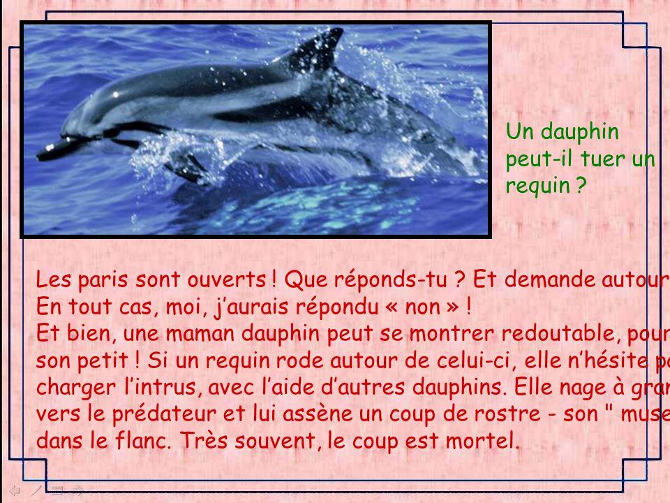 Un dauphin peut-il tuer un. requin Les paris sont ouverts ! Que réponds-tu Et demande autour de toi