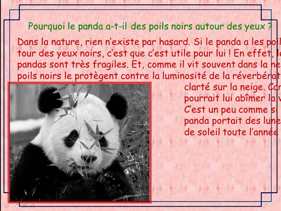 Pourquoi le panda a-t-il des poils noirs autour des yeux