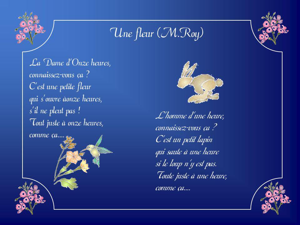 Une fleur (M.Roy) La Dame d'Onze heures, connaissez-vous ça