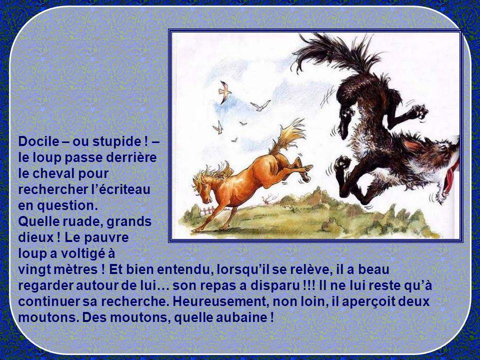 Docile – ou stupide ! – le loup passe derrière. le cheval pour. rechercher l'écriteau. en question.