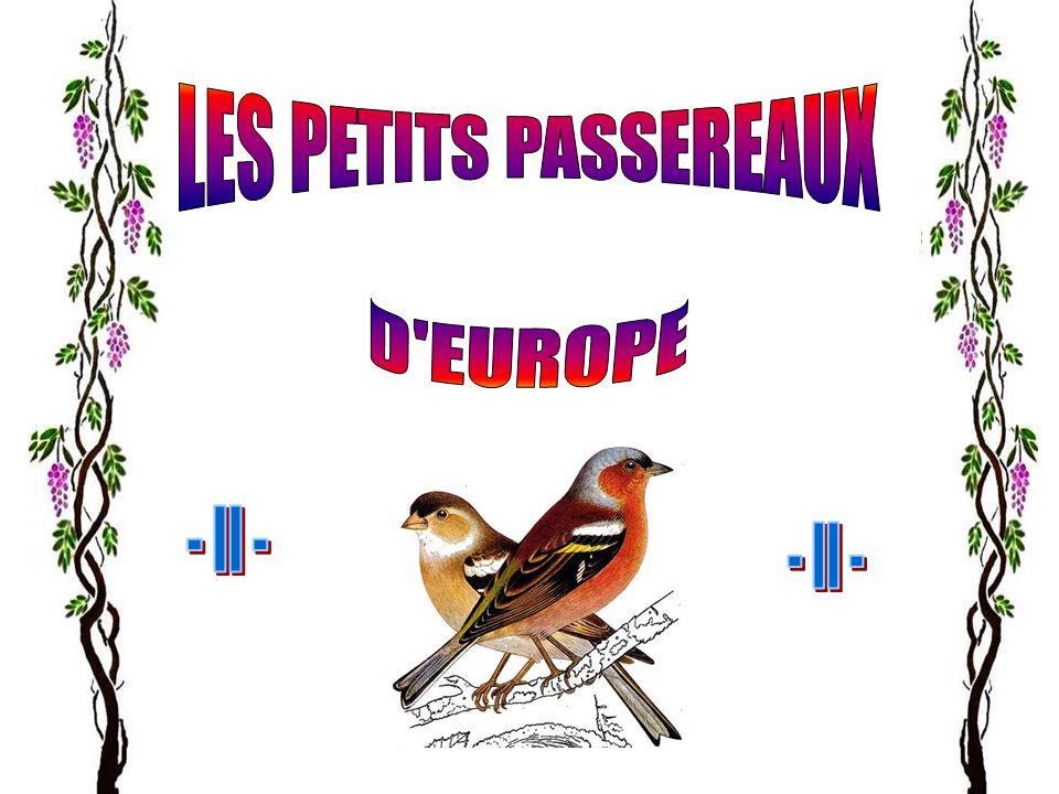 LES PETITS PASSEREAUX D EUROPE - II - - II -