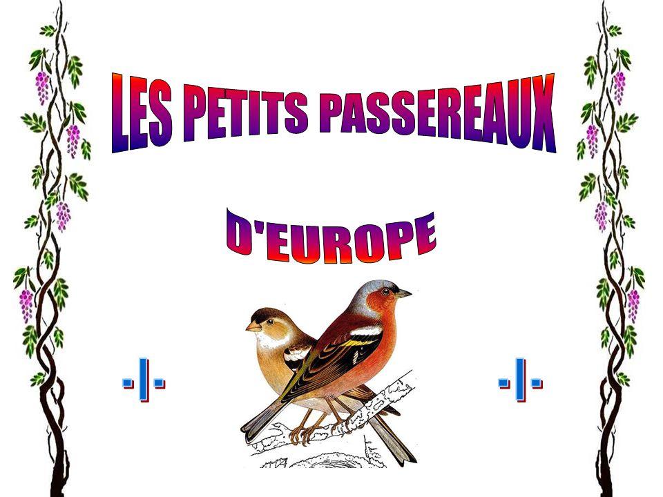 LES PETITS PASSEREAUX D EUROPE - I - - I -