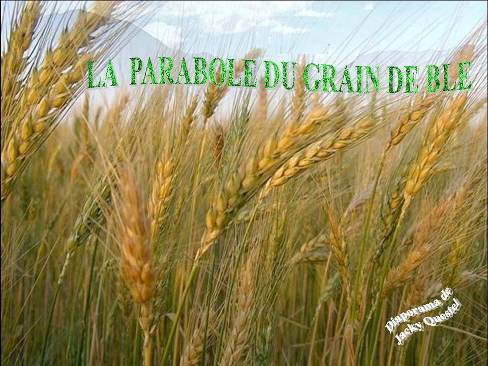 LA PARABOLE DU GRAIN DE BLE