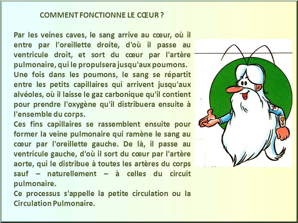 COMMENT FONCTIONNE LE CŒUR