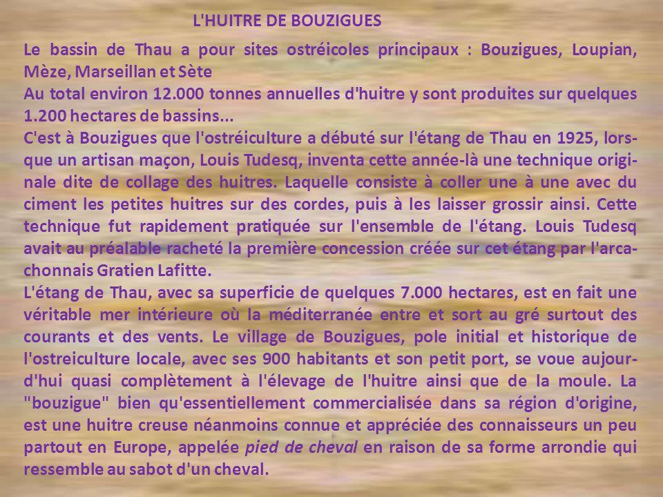 L HUITRE DE BOUZIGUES Le bassin de Thau a pour sites ostréicoles principaux : Bouzigues, Loupian, Mèze, Marseillan et Sète.
