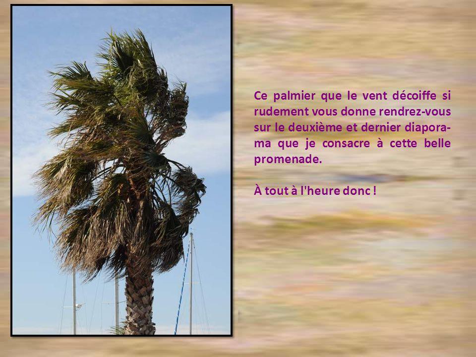 Ce palmier que le vent décoiffe si rudement vous donne rendrez-vous sur le deuxième et dernier diapora-ma que je consacre à cette belle promenade.