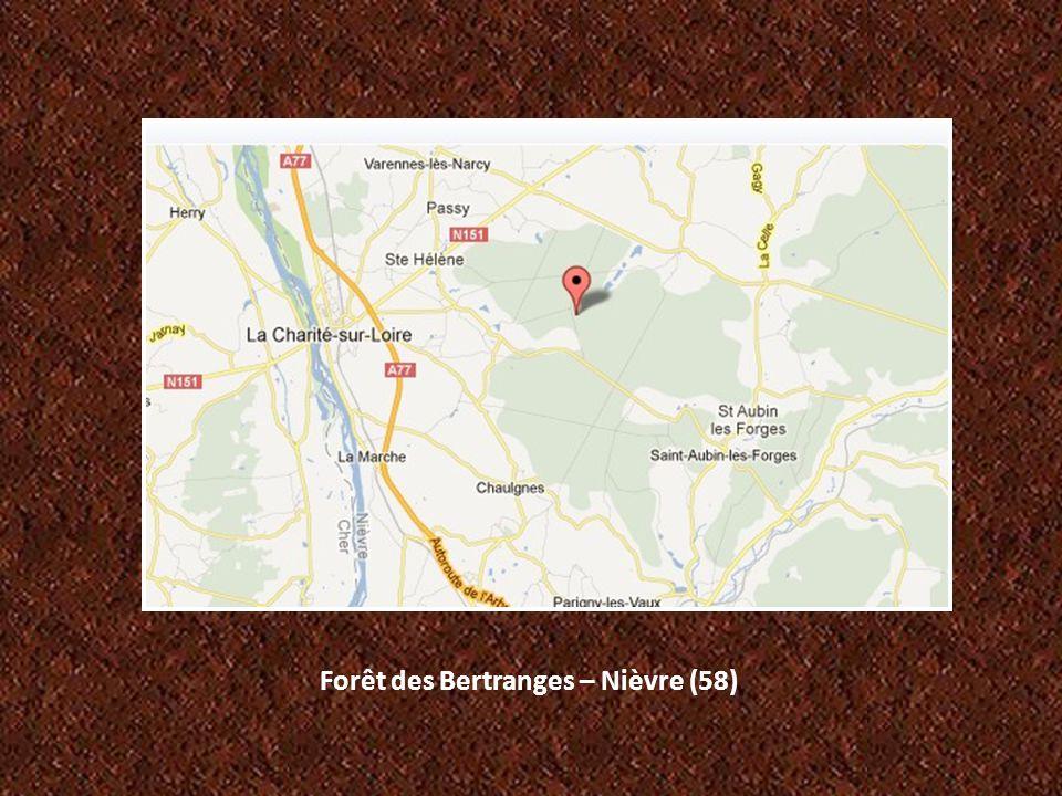 Forêt des Bertranges – Nièvre (58)