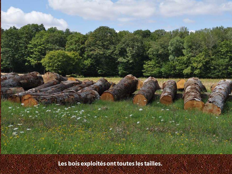 Les bois exploités ont toutes les tailles.