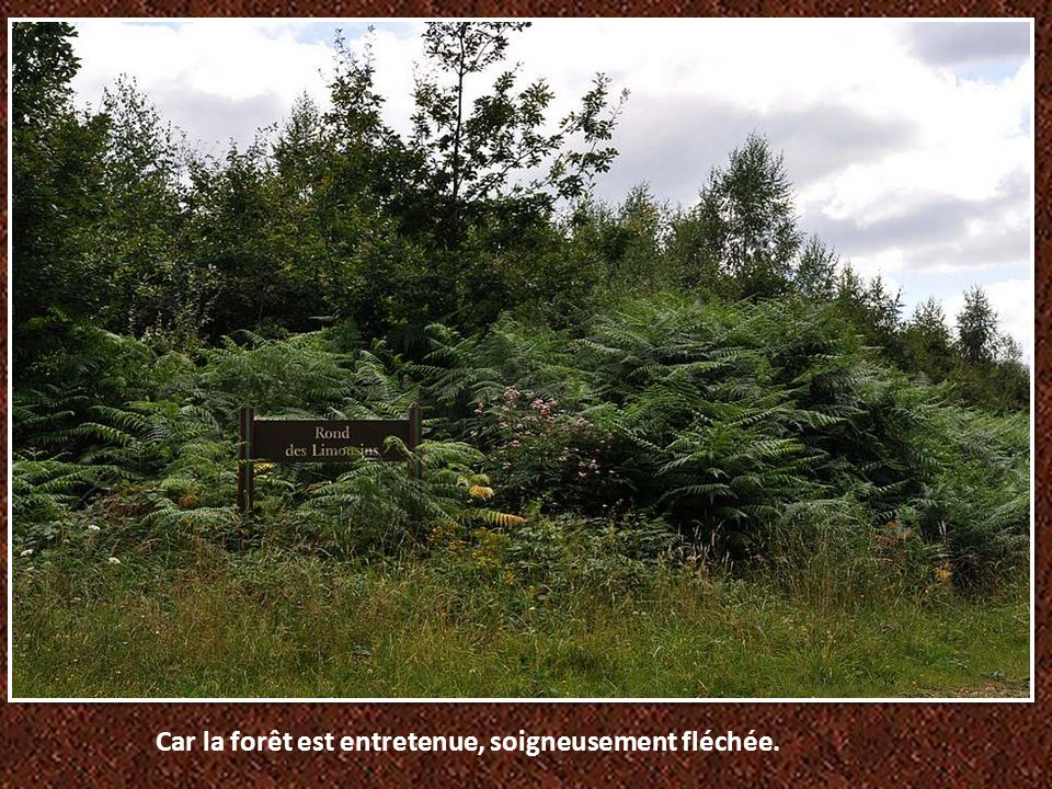 Car la forêt est entretenue, soigneusement fléchée.