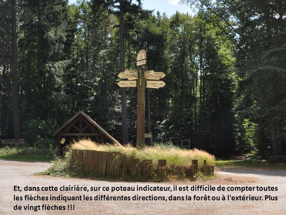 Et, dans cette clairière, sur ce poteau indicateur, il est difficile de compter toutes les flèches indiquant les différentes directions, dans la forêt ou à l extérieur.