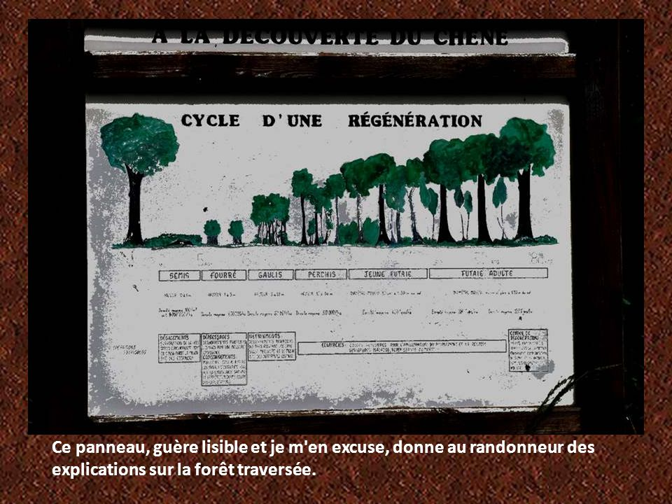 Ce panneau, guère lisible et je m en excuse, donne au randonneur des explications sur la forêt traversée.