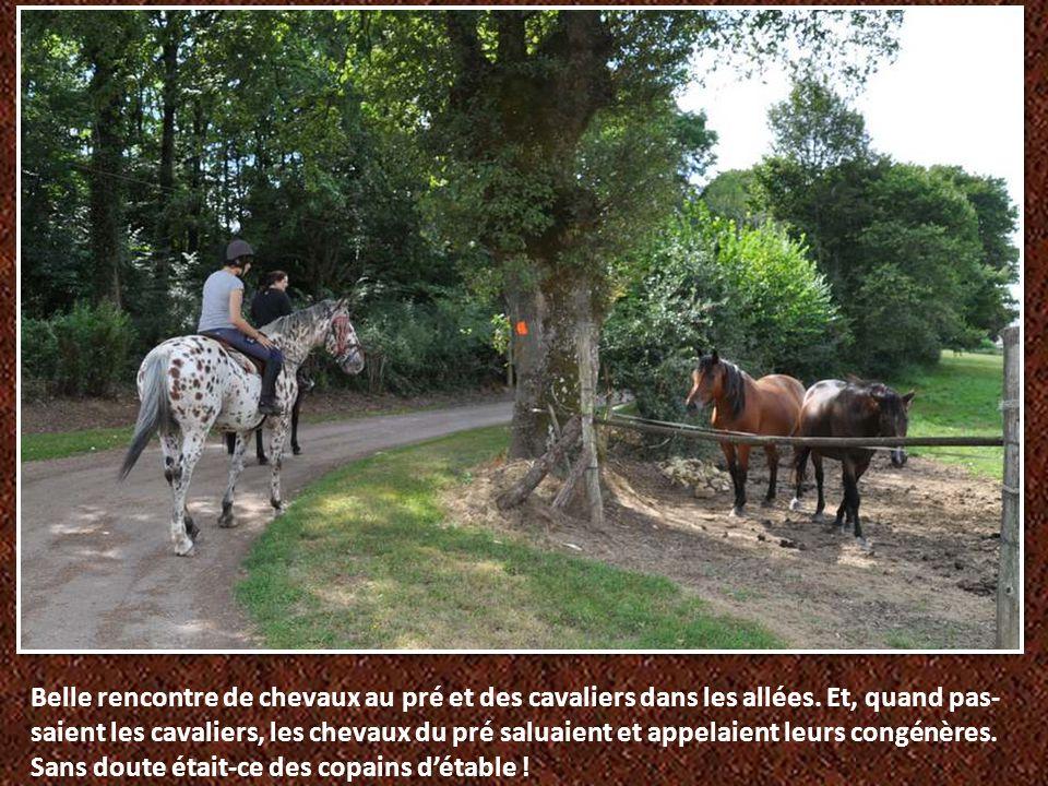 Belle rencontre de chevaux au pré et des cavaliers dans les allées