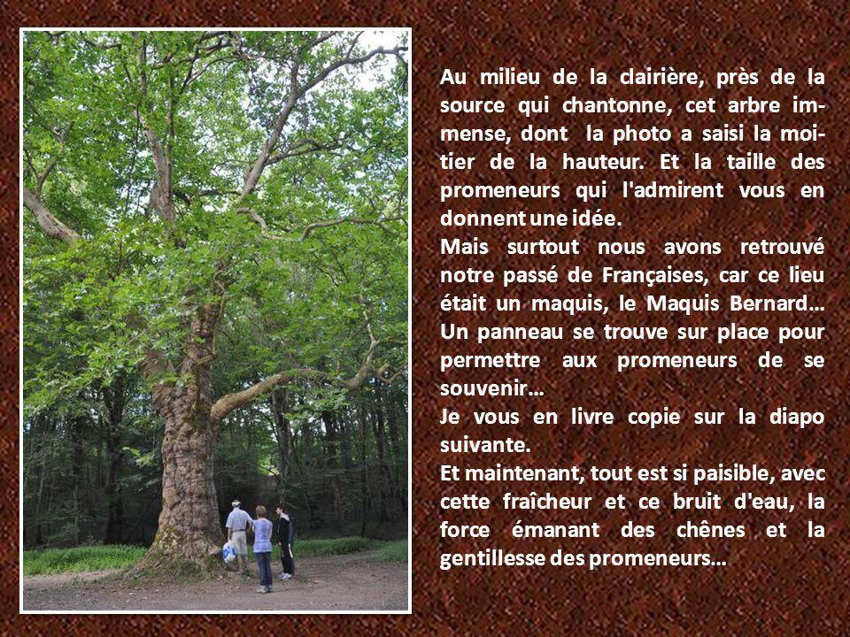 Au milieu de la clairière, près de la source qui chantonne, cet arbre im-mense, dont la photo a saisi la moi-tier de la hauteur. Et la taille des promeneurs qui l admirent vous en donnent une idée.