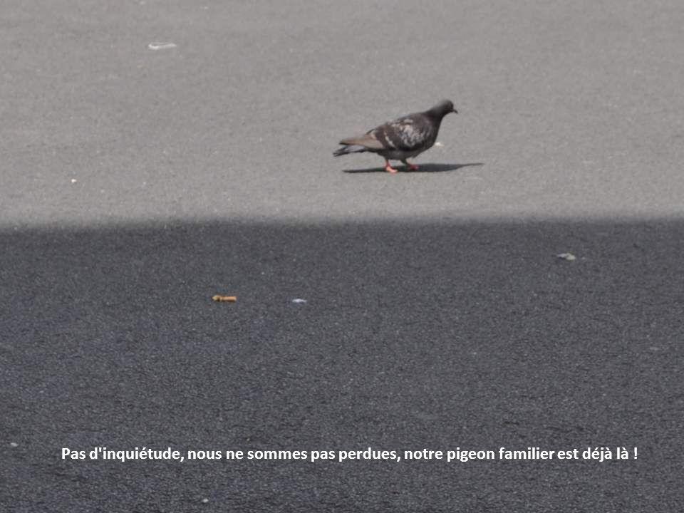 Pas d inquiétude, nous ne sommes pas perdues, notre pigeon familier est déjà là !