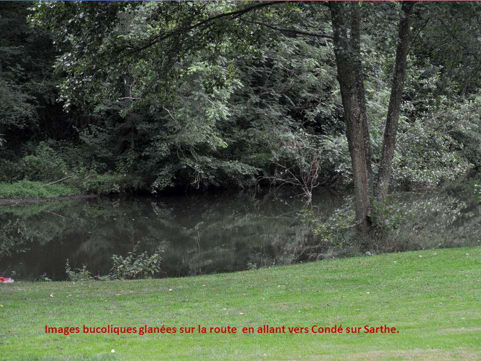 Images bucoliques glanées sur la route en allant vers Condé sur Sarthe.