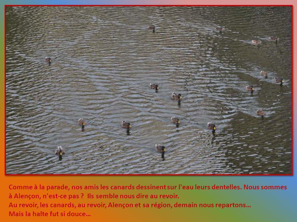 Comme à la parade, nos amis les canards dessinent sur l eau leurs dentelles. Nous sommes à Alençon, n est-ce pas Ils semble nous dire au revoir.