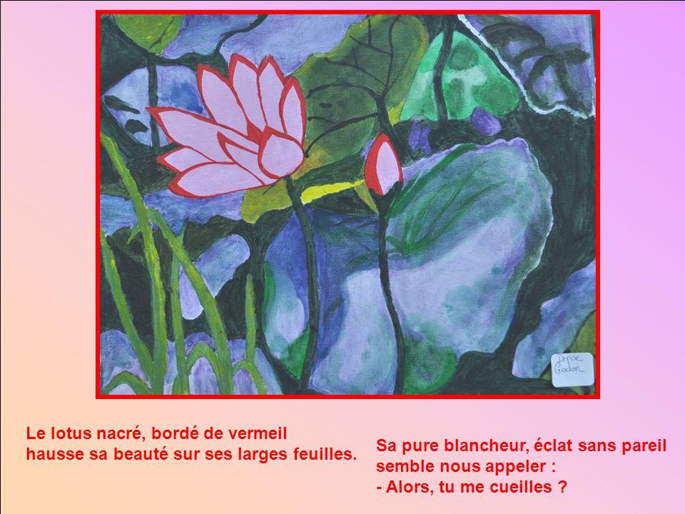 Le lotus nacré, bordé de vermeil hausse sa beauté sur ses larges feuilles.