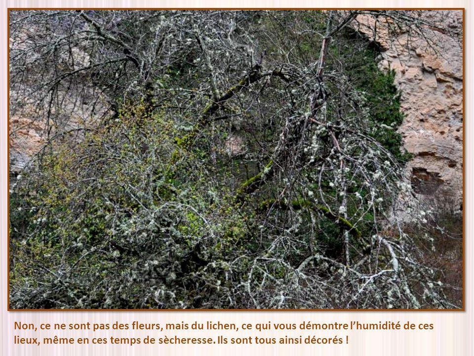 Non, ce ne sont pas des fleurs, mais du lichen, ce qui vous démontre l'humidité de ces lieux, même en ces temps de sècheresse.