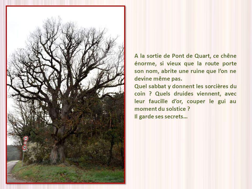 A la sortie de Pont de Quart, ce chêne énorme, si vieux que la route porte son nom, abrite une ruine que l'on ne devine même pas.