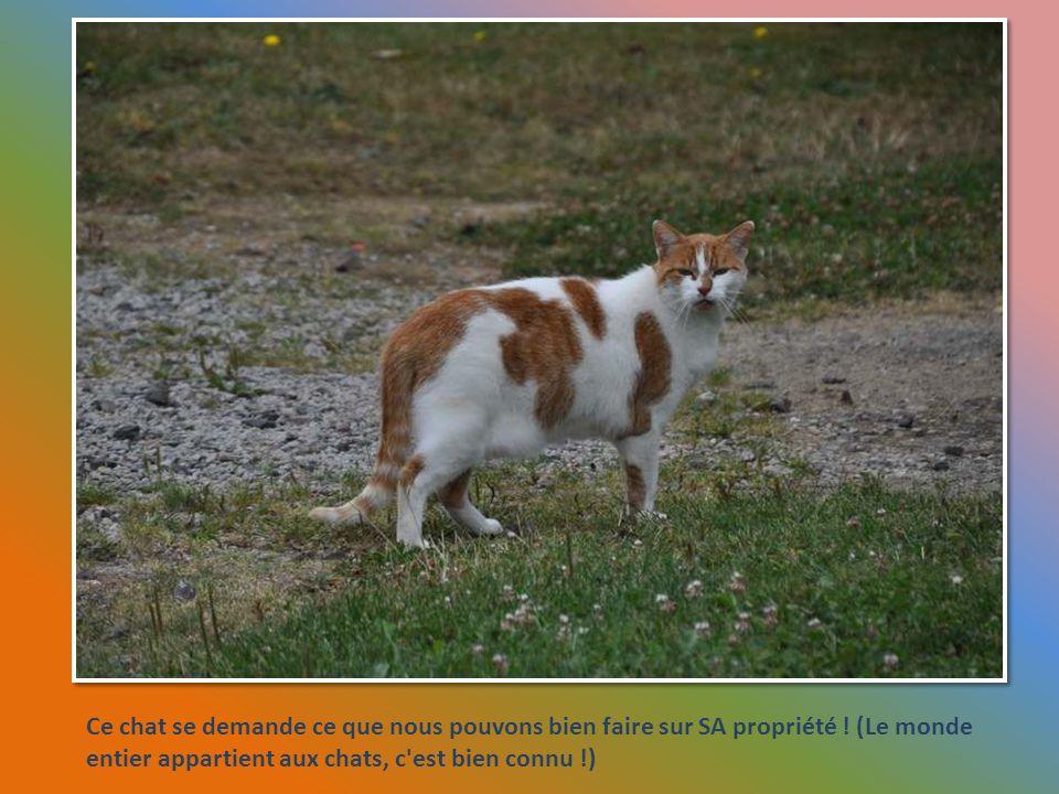 Ce chat se demande ce que nous pouvons bien faire sur SA propriété