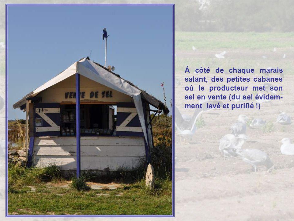 À côté de chaque marais salant, des petites cabanes où le producteur met son sel en vente (du sel évidem-ment lavé et purifié !)