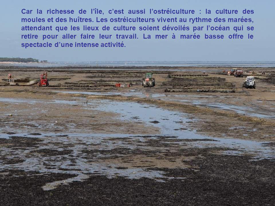 Car la richesse de l'île, c'est aussi l'ostréiculture : la culture des moules et des huîtres.