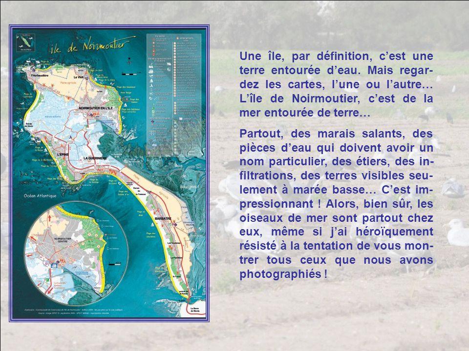 Une île, par définition, c'est une terre entourée d'eau
