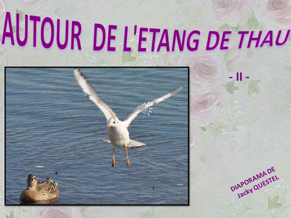 AUTOUR DE L ETANG DE THAU