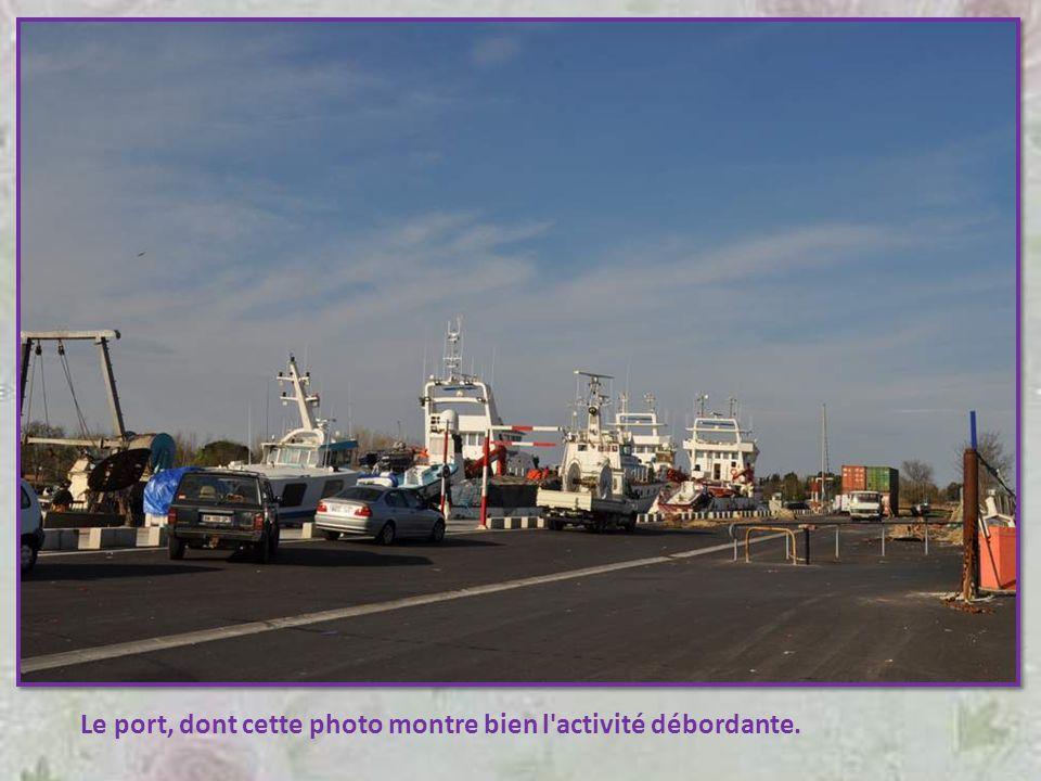 Le port, dont cette photo montre bien l activité débordante.