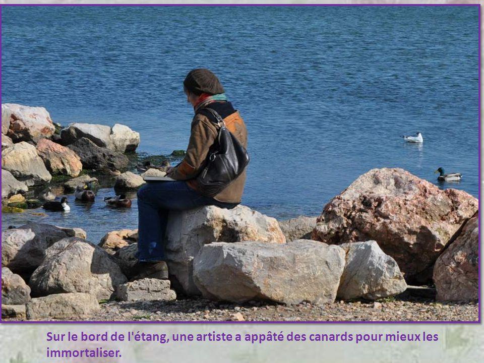 Sur le bord de l étang, une artiste a appâté des canards pour mieux les immortaliser.