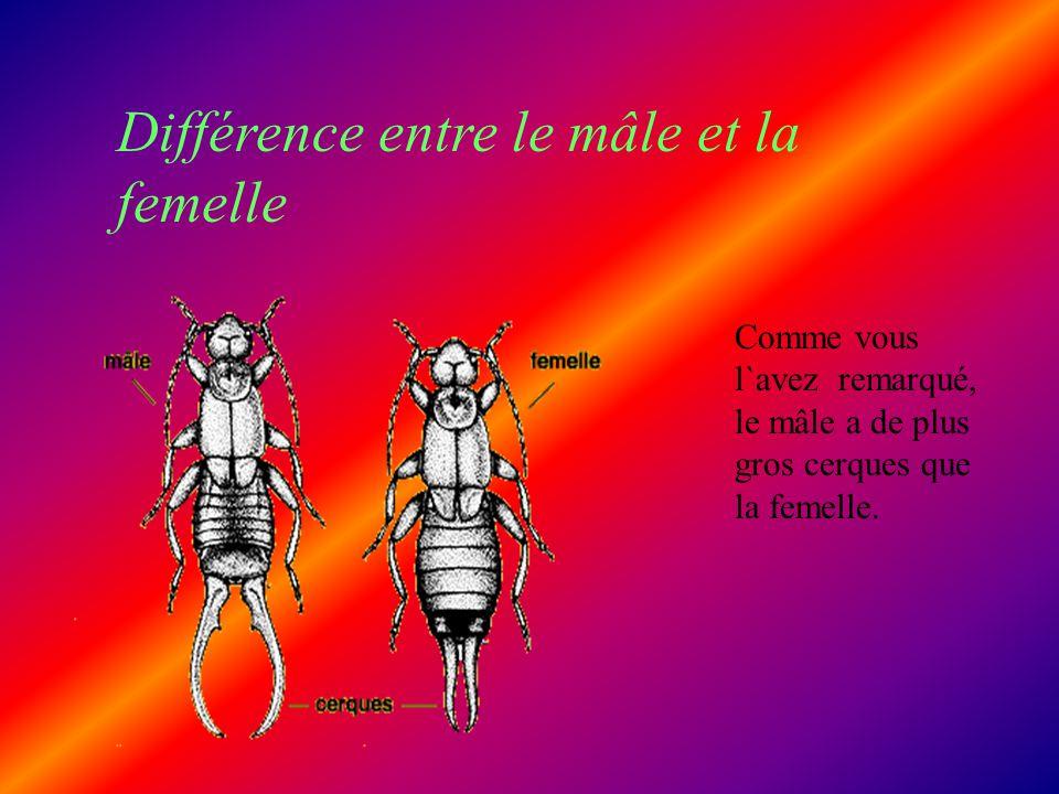Différence entre le mâle et la femelle